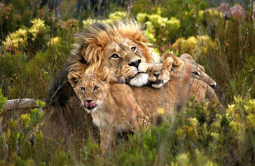 Gondwana Private Game Reserve