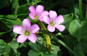 Flora of Tygerberg Nature Reserve