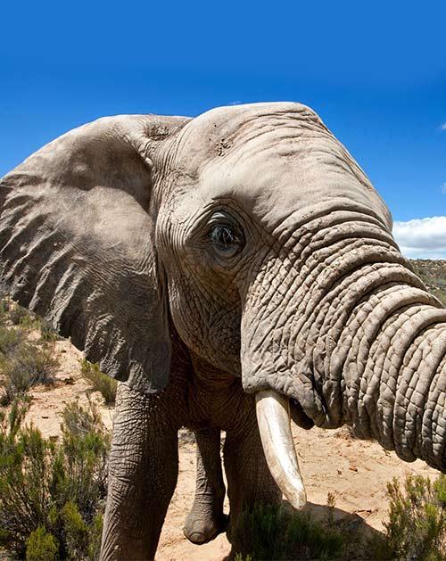 Safari Game Reserves – Cape Town