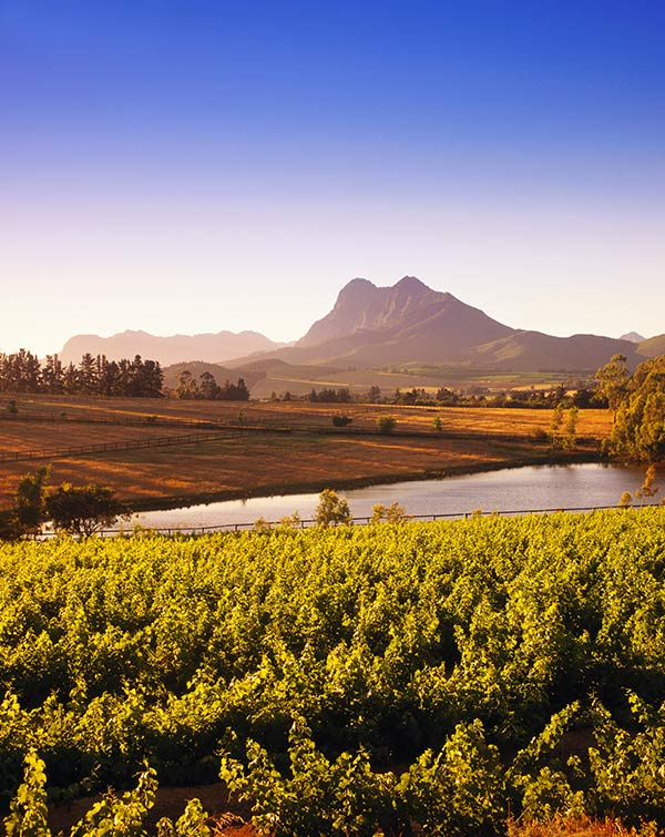 Popular winelands routes
