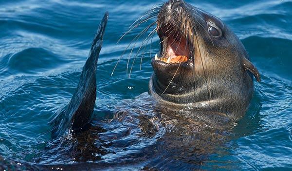 Seal Island - Cape Town
